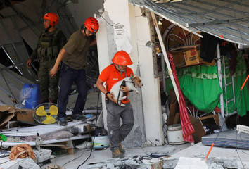 A rescuer carries a search dog as they try to reach survivors at a collapsed four-storey building following an earthquake in Porac town