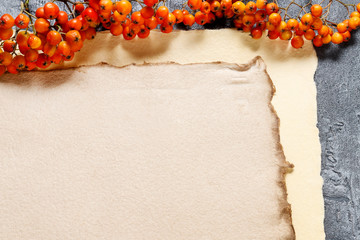 Wall Mural - Sheets of vintage paper and rowan berry twigs