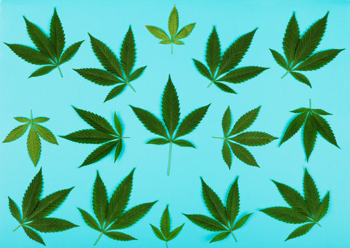 Cannabis Leaves on Turquoise