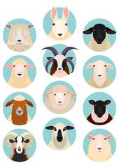 sheep heads set