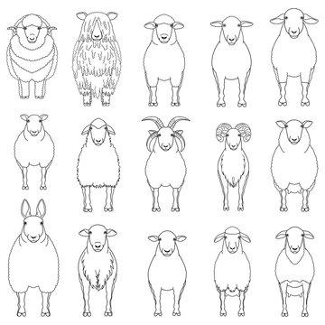 sheep line art set