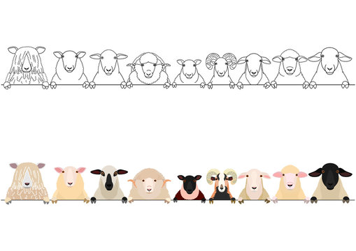 various sheep heads border set