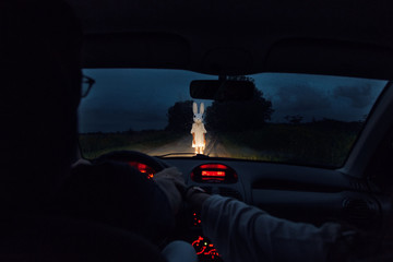 Couple in car and creepy bunny on road
