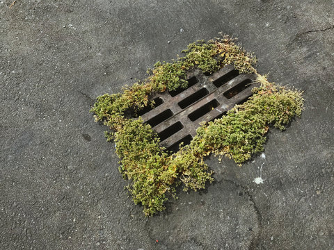 Waste water drainage on urban street with growing moss