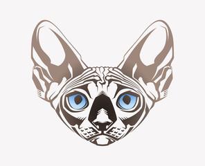 Sphinx cat. Close-up portrait
