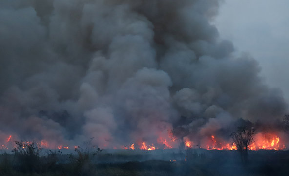 Extensive forest fire with heavy dark smoke in tropical forest. Cause of deforestation.