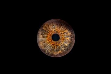 Fotobehang Iris Iris2