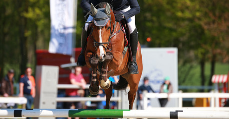 Horse brown with rider in flight over the obstacle photographed from the front..