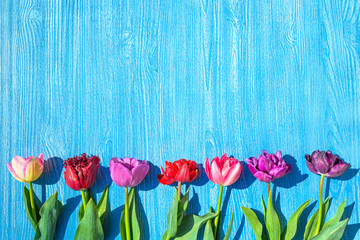 a colorful tulips flowers spring background