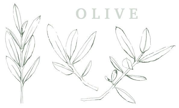 Olivenzweig Illustration auf weißem Hintergrund