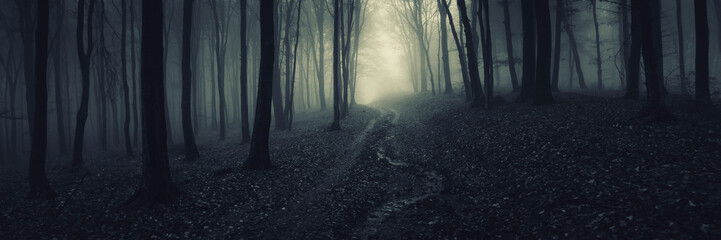 dark forest panorama, path in magical scary forest at night Fotomurales