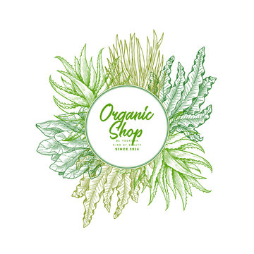 Super greens design template. Aloe, wheatgrass, spinach, spirulina (seaweed). Green plants. Vector illustration