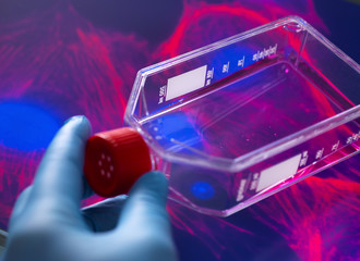 Cell biologist viewing stem cells cultivated red growth medium in a culture jar with the microscope image of the cell structure in the background