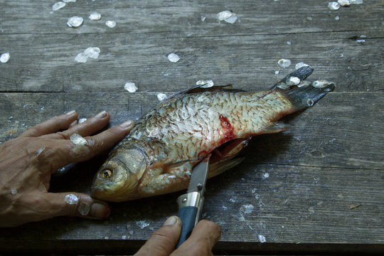 Man's hands cutts and cleans river fresh fish with knife on a dirty weathered wooden surface