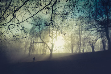 Sunrise and trees in the morning, one person walking on meadow