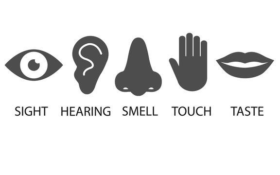 Human senses icon. Vector illustration, flat design.