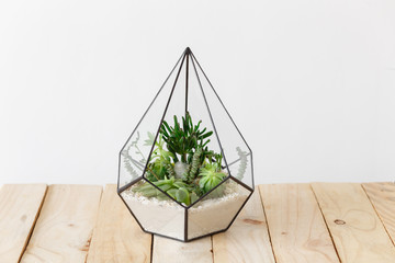 Glass florarium vase with succulent plants on wooden background. Small garden with miniature cactuse, echeveria, crassula. Home indoor plants.