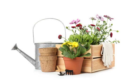 Potted blooming flowers and gardening equipment on white background