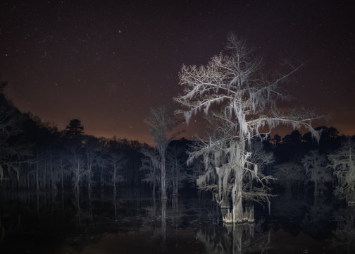 Creepy Bald cypress tree at night in the swamp
