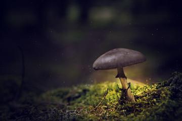 Kleiner Pilz leuchtend in dunklen Wald