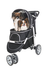pushchair for dog