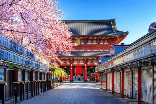 Cherry blossoms and Temple in Asakusa Tokyo, Japan.