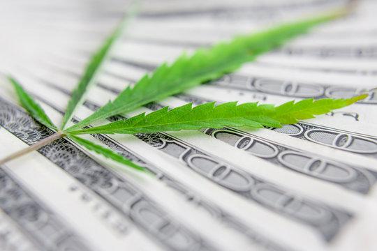 US dollar bills over the green cannabis leaves. Money and mariju