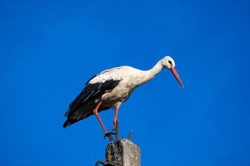 Stork sitting on top of a pillar