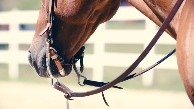 Western horse head with halter