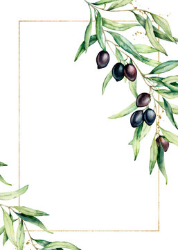 Watercolor card with olive tree branch and golden frame. Hand painted floral illustration isolated on white background. Botanical greeting template for design.