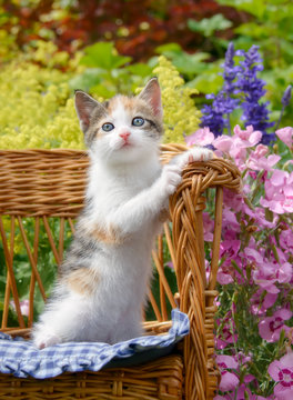 Cute baby cat kitten, white with tortoiseshell patches, sitting upright in a small wicker chair in a colorful flowering garden