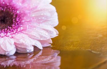Summer, summertime - pink flower on golden background