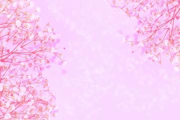 Printed kitchen splashbacks Purple Natural floral background of bright daisy flowers