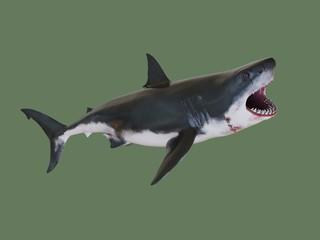 Shark killer. 3d illustration