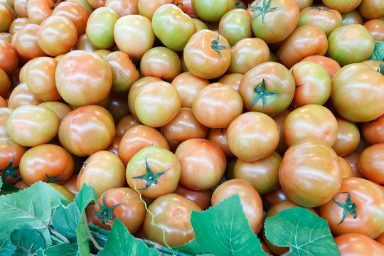 슈퍼마켓 진열대의 반숙 토마토