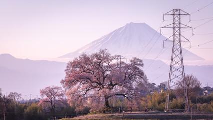 山梨県 わに塚の桜 富士山