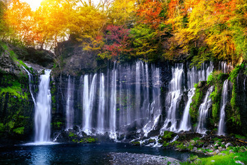 Wall Mural - Shiraito waterfall in Japan.