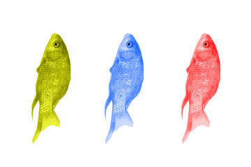 Fish of different colors on a white background. Red, green and blue fish arranged in a row. Pop art design, modern concept