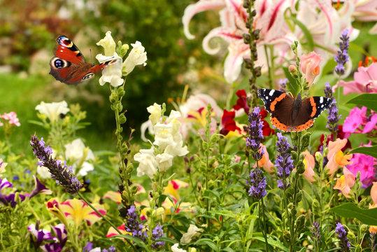 Schmetterling 504