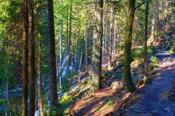 trail through lush green forest in bavarian forest