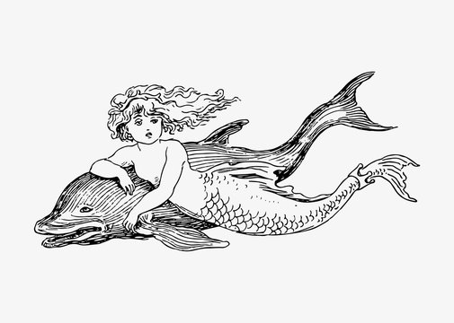 Mermaid and a dolphin