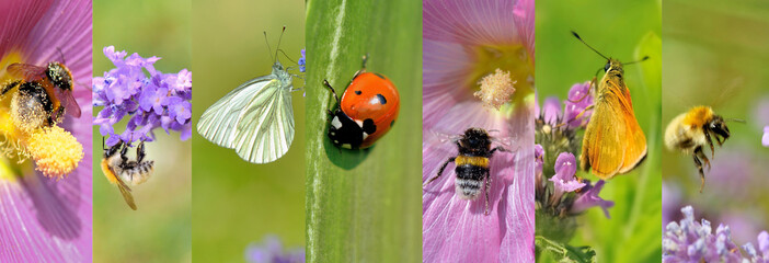 collage of a insects collection on flowers