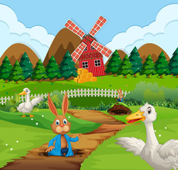 A rabbit in farmland
