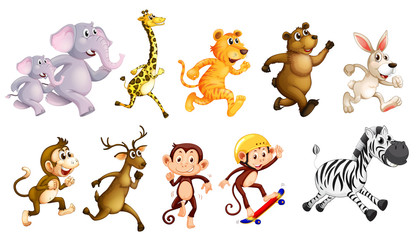 Set of wild animals running