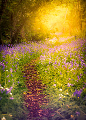 Woodland path with bluebells and colourful wildflowers in a forest