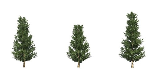 Set of Fraser Fir trees - isolated on a white background