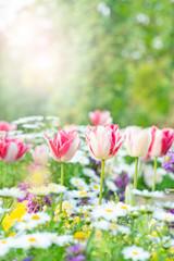 春の花 花壇