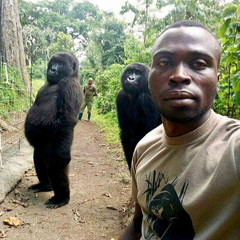 Mathieu Shamavu poses for a selfie with two gorillas at Virunga National Park