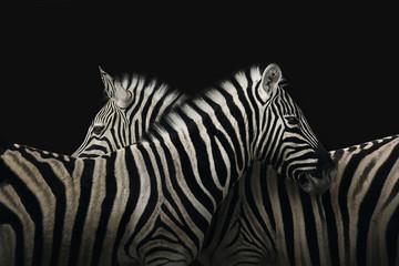 Keuken foto achterwand Zebra True zebra love