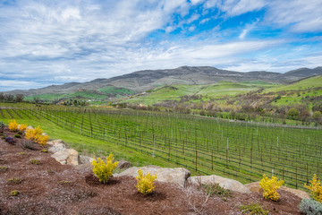 Winery view in springtime